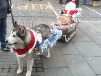 dog with sleigh